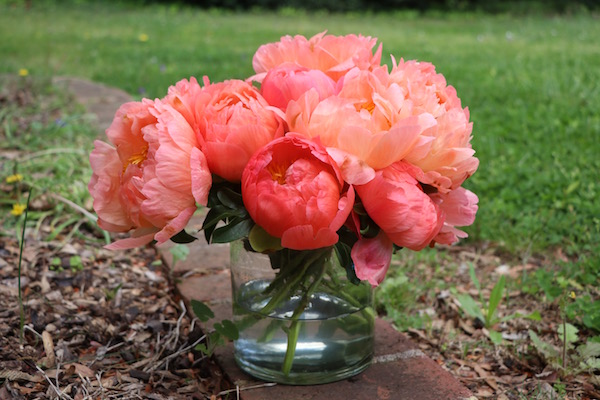Bare Root Peonies